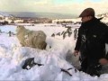 Co można wykopać w śniegu?