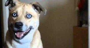 Pies o niesamowitym spojrzeniu