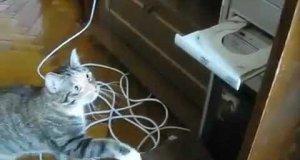 Kot walczy z mechanicznym wrogiem