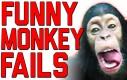Kompilacja małpich wpadek