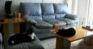 Jeden dzień z życia kota