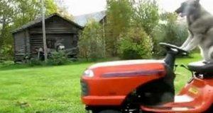 Kosiarz trawników