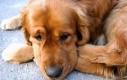Pies wita się z właścicielem po 3 latach nieobecności