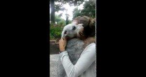 Pies mdleje z radości na widok członka rodziny, którego nie widział przez dwa lata
