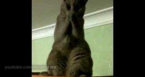 Kot w opałach błaga człowieka o pomoc