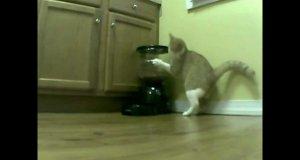 Kot i dozownik jedzenia