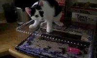 Kot dobiera się do tortu