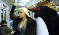 Atak pingwinów w rosyjskim metrze