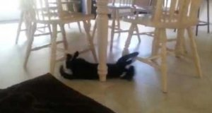 Kot i okrążenia wokół stołu