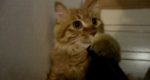 Kot vs odkurzacz