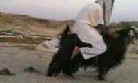 Arabski motocykl