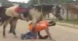 Niesłychanie cierpliwy koń