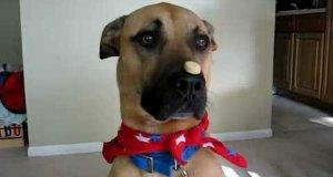 Fajny psi trick