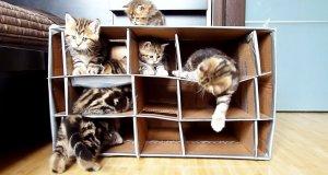 Oblężenie fortu przez kociaki