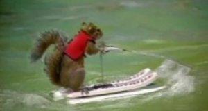 Zabawna wiewiórka
