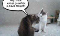 Nieudany podryw kota