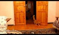 Kot skacze jak Mario