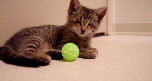 Niewidomy kotek i jego pierwsza zabawka