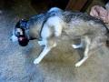 Jak wyłączyć psa?