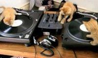 DJ Kotki