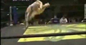Wrestling po Japońsku