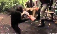 Małpa obsługuje broń