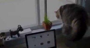 Co ten kot zobaczył za oknem?