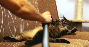 Kot, który uwielbia być odkurzany