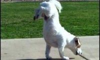Niesamowite psie sztuczki 2