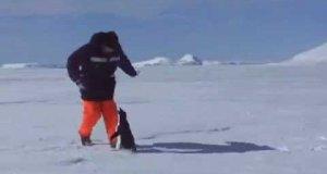 Pingwin atakuje!