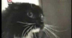 Gadający kot