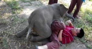Mały słoń chce się bawić jak mały pies