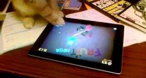 Kot gra na tablecie