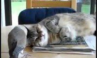 Kot z anielską cierpliwością