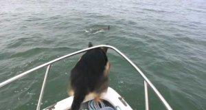 Pies postanowił się pobawić z delfinami