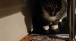 Kot dawaj kasę!