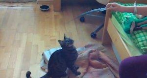 Niezdarne koty