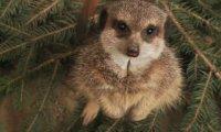 Zwierzęta z gdańskiego Zoo czekają na Mikołaja