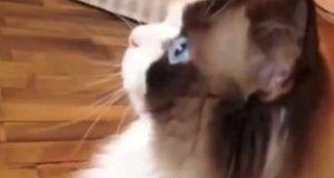 Najlepsze krótkie filmiki z psami i kotami