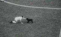 Zwierzęta w piłce nożnej