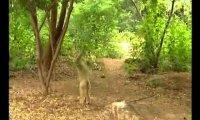 Psotliwa małpa