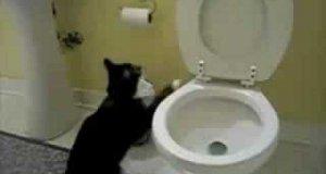 Koty w toalecie