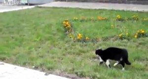Kot vs pies - Stawka większa niż życie