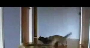Driftujące koty