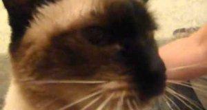 Kot wydający dziwne dźwięki