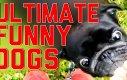 Kompilacja psich niepowodzeń - FailArmy