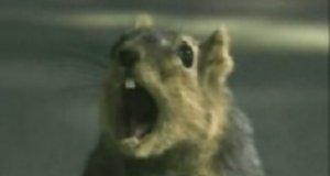 Wiewiórka vs samochód