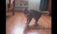 Nawiedzony kot