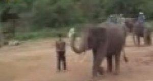 Słoń piłkarz
