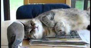 Ptak nie pozwala kotu spać